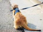 ミーアキャットの飼育の仕方!ペットの値段や寿命、餌や臭いの注意点