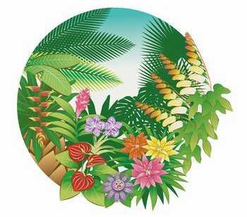 中南米の花