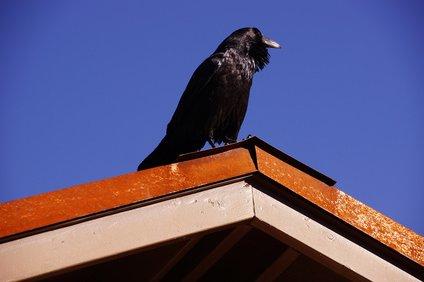 屋根の上のカラス